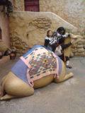 ラクダのフォトスポット