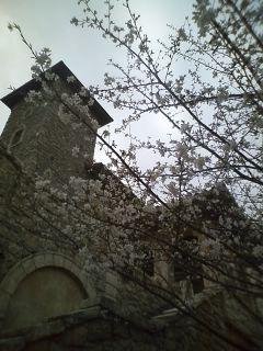 春ですねぇ〜( ̄・・ ̄)