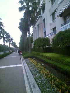アンバサダーホテル脇の花壇、花一新