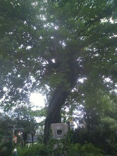 ロストリバーデルタのクリスマスツリー